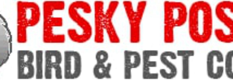 Pesky Possum Bird & Pest Control
