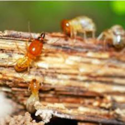 Total Termite & Pest Control